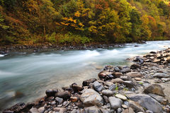 River with trees in autumn Royalty Free Stock Image