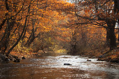 River and trees in autumn. Scenic view of river receding through wood trees in autumn Royalty Free Stock Images