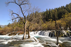 River and trees in Jiuzhaigou Stock Images