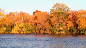 River and trees. Landscape stock footage