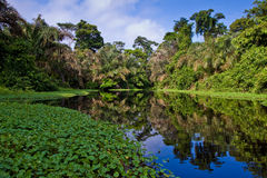 A river and trees in a rainforest Stock Photo