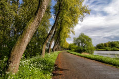 River and Trees. Trees and a road alongside the Schelde river in Belgium stock photography