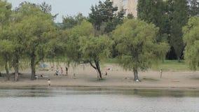 River Trees Sand Rain. Beach area of a tropical rain forest stock footage