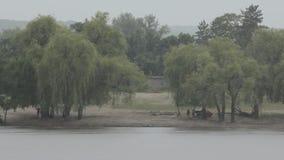 River Trees Sand Rain. Beach area of a tropical rain forest stock video