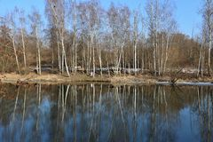 River with trees on the shore Stock Image