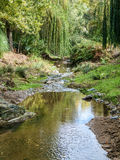 River between trees. A small river runs through between nature Royalty Free Stock Photography