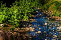 River Through The Trees Stock Photo