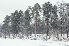 River and trees in snowy park. Frozen river and trees in snowy park Royalty Free Stock Photo