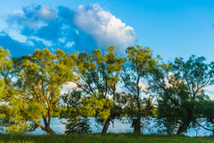 River and trees. Summer landscape with a river and trees on the coast Stock Image