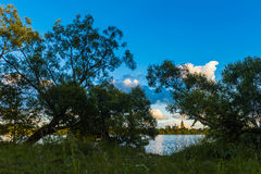 River and trees. Summer landscape with a river and trees on the coast royalty free stock images
