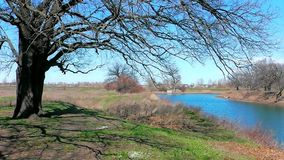 River and trees. stock footage