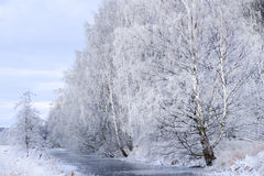 River with trees in winter Royalty Free Stock Photo