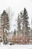 River Trees Winter Landscape Outdoors Nature Snowfall Royalty Free Stock Image