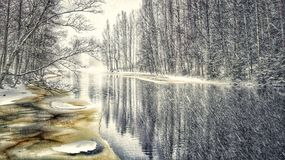 River Trees Winter Snowfall Beautiful Birch Colors Forest Photo Art Royalty Free Stock Photo