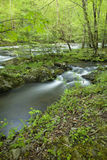 River, Tremont, Great Smoky Mtns NP Royalty Free Stock Photo