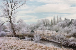 River Trent in Winter. A winter frost at the river Trent in Staffordshire, England Royalty Free Stock Photos