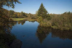 River with tress at begining of fall Stock Image