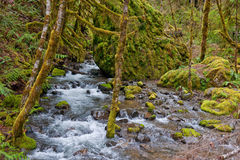 River tributary in forest Stock Photo