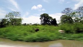 River trip in the jungle stock footage