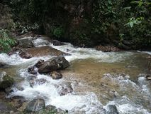 River in the tropical forest in Colombia royalty free stock photo