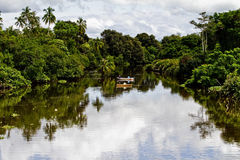 River in tropical jungle Royalty Free Stock Images