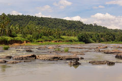 River in tropical jungle. With rocks stock images