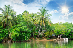 River and tropical plants Royalty Free Stock Image
