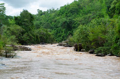 River in tropical rain forest Royalty Free Stock Photography