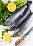 River trout with fresh tomatoes Royalty Free Stock Images