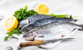 River trout with fresh tomatoes Stock Images