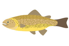 River Trout Royalty Free Stock Image