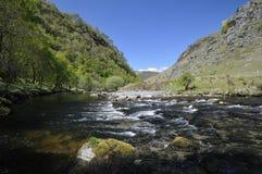 River Tywi RSPB Dinas Stock Image