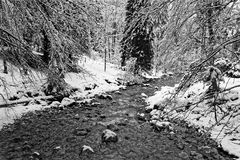 A river under the snow in Chartreuse Black and white royalty free stock photos