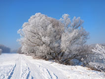 Free River Under The Ice And Tree Branches Covered With White Frost Stock Image - 84746841