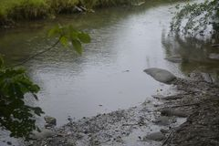River in the upland. This river is in the upland area. Siltation is heavy. The water is slow royalty free stock photography