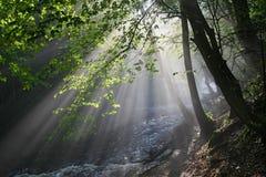 River Valley в утре стоковая фотография