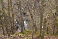 River Valley en un bosque Imagen de archivo libre de regalías