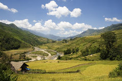 River valley between rice terraces. This photo is from Sapa, Vietnam.  The terraces are used to grow rice.  The golden colour shows that it's harvest time.  Rice Royalty Free Stock Image