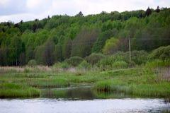 River Valley y bosque Foto de archivo libre de regalías