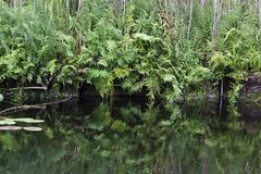 River and vegetation Royalty Free Stock Photos