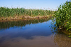 River and vegetation Royalty Free Stock Photography