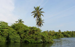 River view. Blue and green river view at trivandrum, kerala, india Stock Photos
