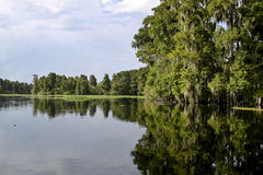 River view. Hillsborough river, tampa florida - canoe trip Royalty Free Stock Images