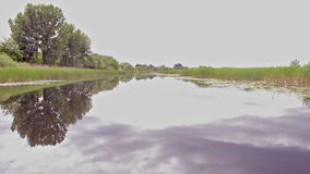 River view from the boat. Nature reserve. Bulrush and Trees reflecting in a river.Spring Trees. Untouched Nature stock video