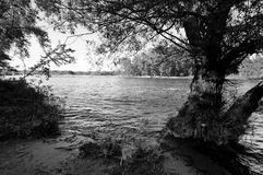 River View_BW. A shore view of the Mississippi Royalty Free Stock Photography