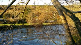 River View Stream Tree Branch. River Lee in counrty Cork Ireland View Stream Tree Brand Royalty Free Stock Images