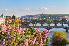 River Vltava with bridges in Prague, trees in the foreground, Czech Republic Royalty Free Stock Photography