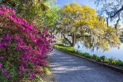 River Walkway Azaleas and Live Oak Trees with Hanging Moss SC stock photos