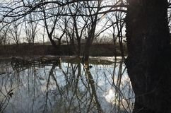 River water in a flood. Polluted river water in a flood with flooded trees on a river bank stock photo