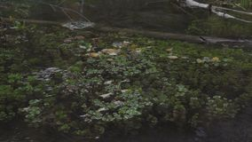 River water flow, plants and log close up. 4k stock video footage